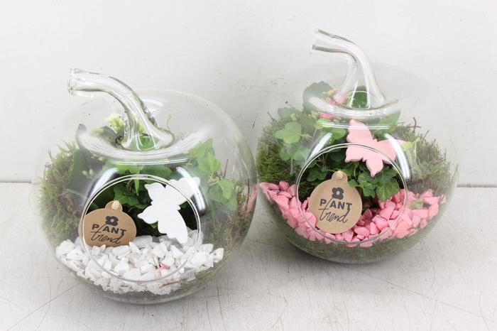 arr. PL - Glazen appel - roze/wit