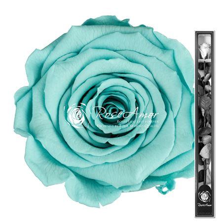 <h4>70cm Stem Blu02</h4>