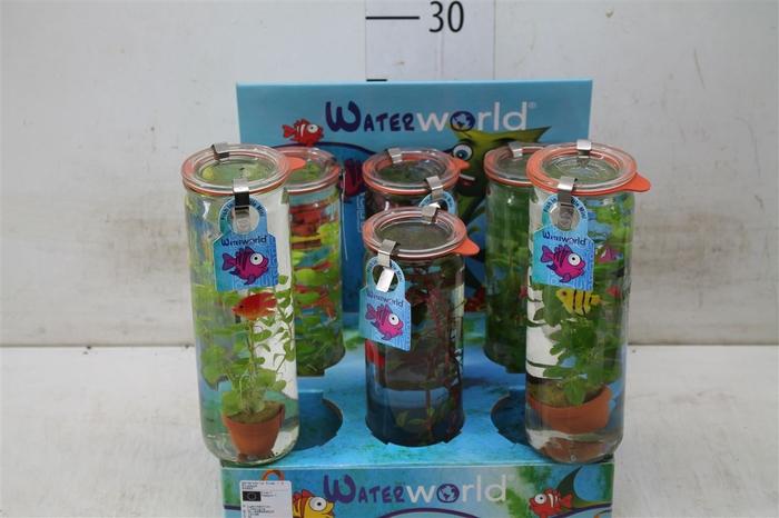 <h4>Aquariumplanten Bluppies</h4>