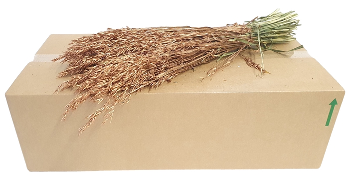 <h4>Avena per bunch Antique Gold</h4>