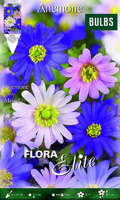 <h4>Z Anemone Blanda Mixed</h4>