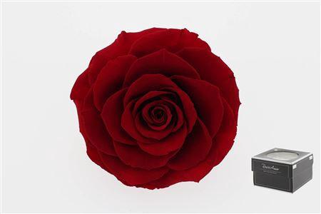 <h4>Pr 5 Red-02 Bonita Xxl</h4>