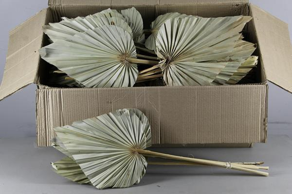 <h4>Df Palm Spear Arrow Giant Nat.</h4>