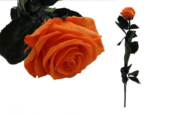 <h4>Rosa preservada orange flame</h4>