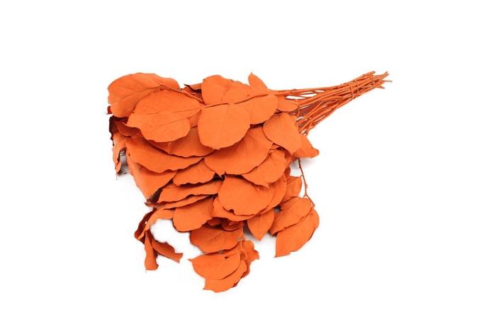 <h4>Pres Salal Orange</h4>