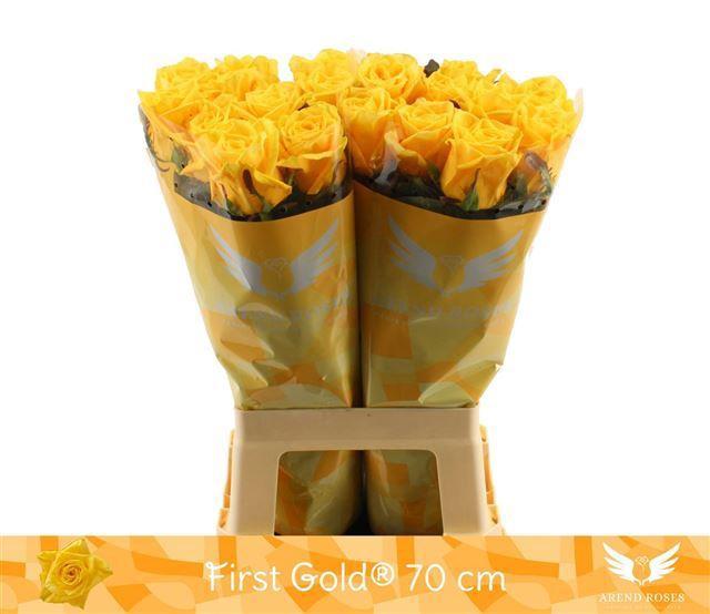 <h4>R GR FIRST GOLD</h4>