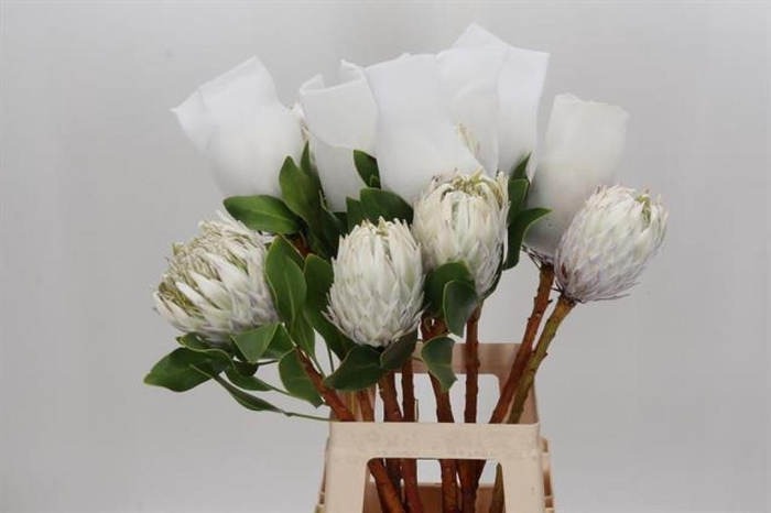 <h4>Protea Cy Full Moon</h4>