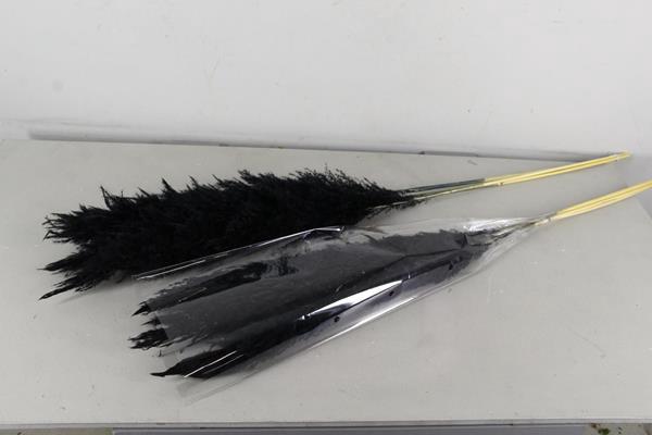 <h4>Df Pampas 115cm  Bs/3pc Black</h4>