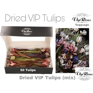 DRIED VIP TULIPS MIX