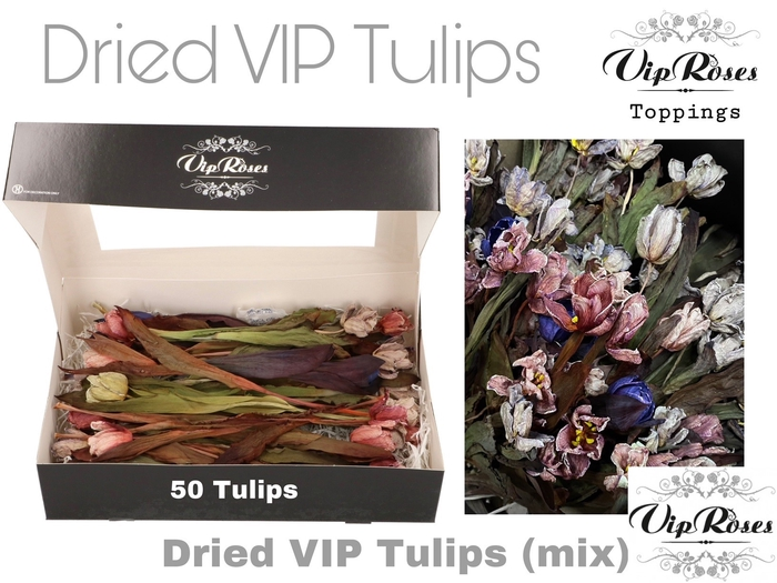 <h4>Vip Dried Vip Tulips Mix</h4>