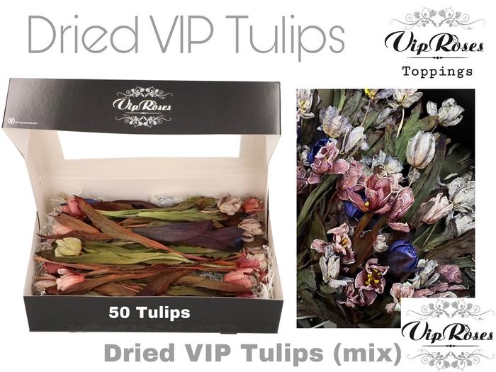 <h4>Vip Dried Vip Tulips Mix</h4>