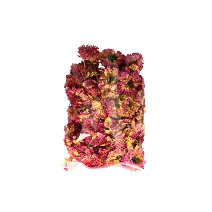 <h4>Droogbloem Dahlia koppen x50</h4>
