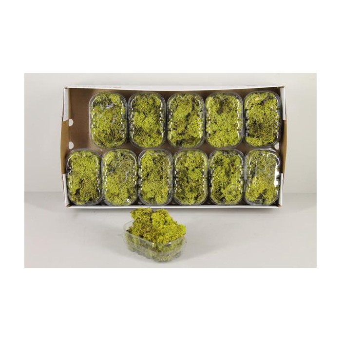 <h4>Moss Icelandic Light Green Box</h4>