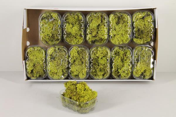 <h4>Moss Icelandic Light Green Box</h4>