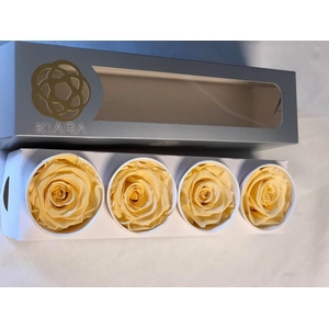 Super Rose Champagne (4)