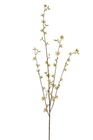 <h4>Blossom sprayx4 Umpqua 104cm yellow</h4>