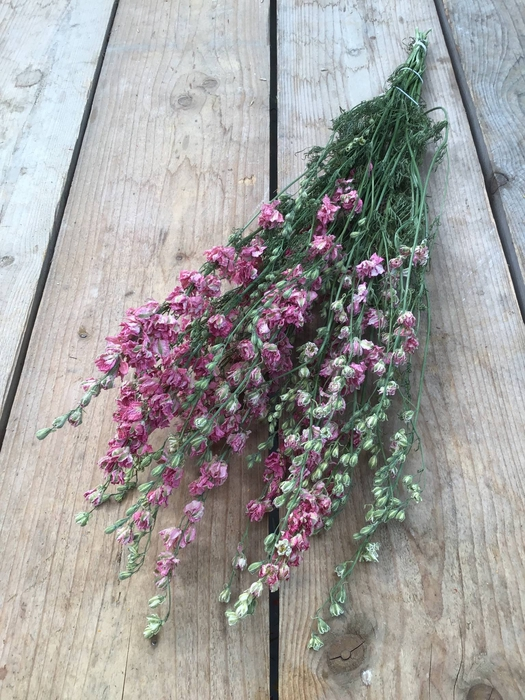 <h4>DRIED DELPHINIUM PINK EXTRA BUNCH</h4>