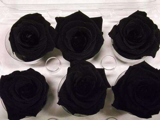 R Prs Black
