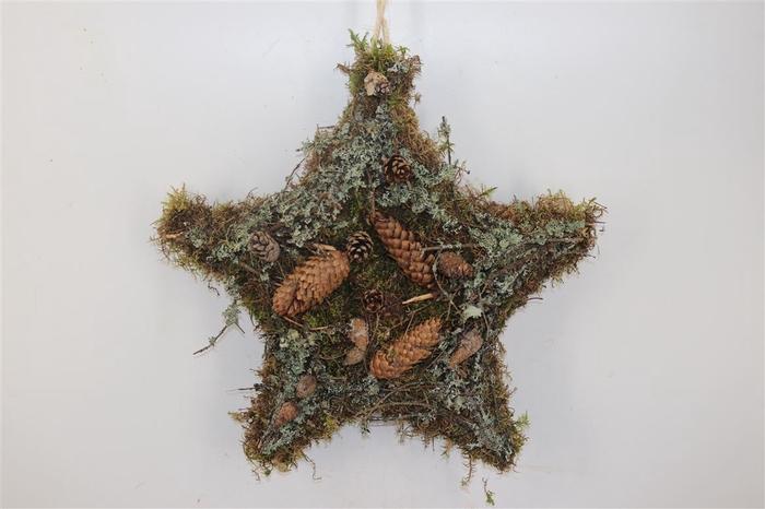 <h4>Moss Star Twig Cones 50x50cm</h4>