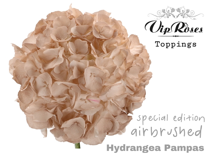 HYDR M PAMPAS