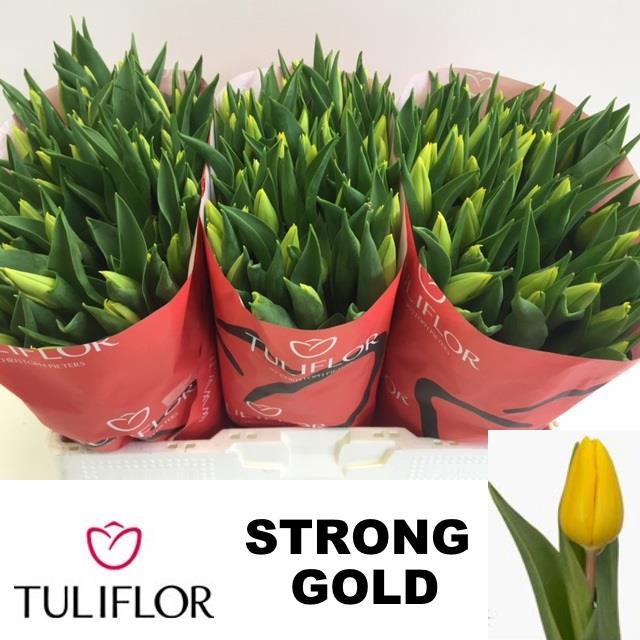 <h4>TU EN STRONG GOLD</h4>