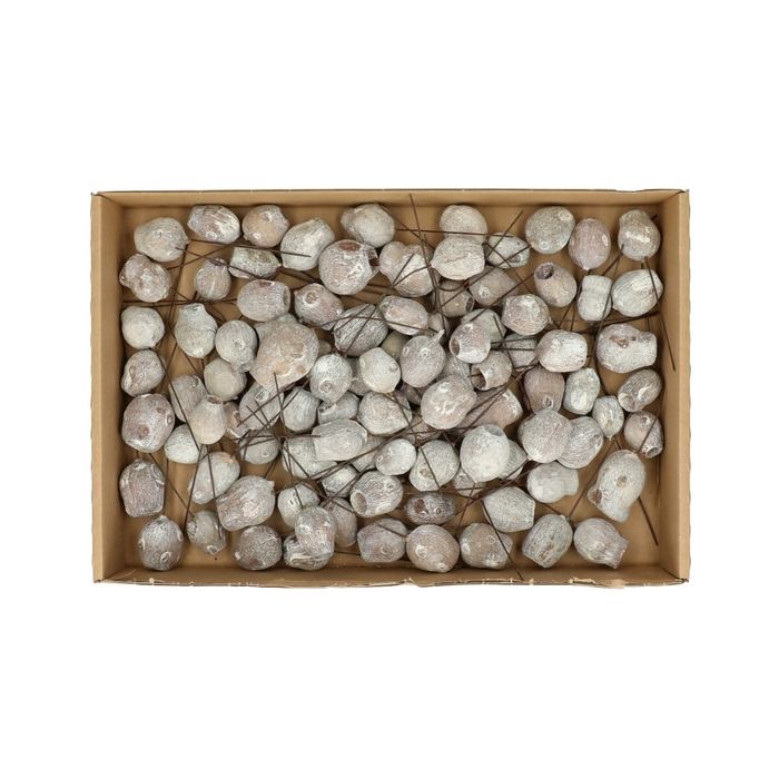 <h4>Dried articles Eucalyptus x100</h4>