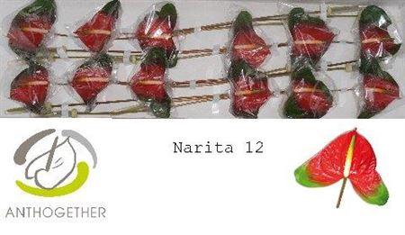 <h4>Anth A Narita</h4>