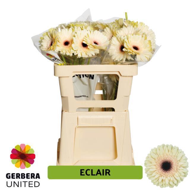 <h4>GE GR ECLAIR</h4>