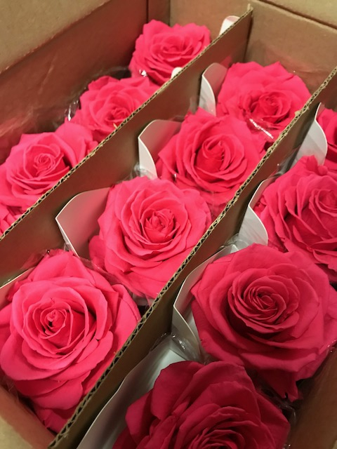 <h4>Rose on stem xl bulk 55cm fuchsia</h4>