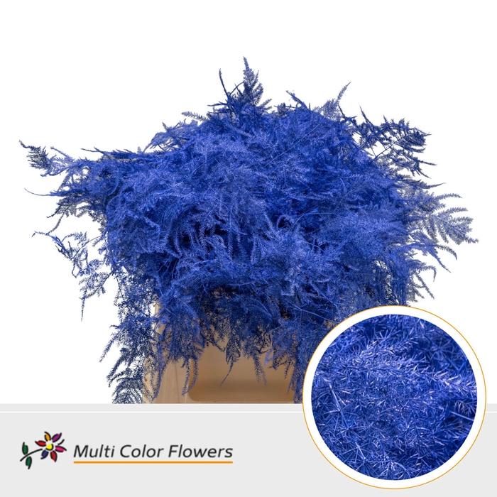 <h4>Asparagus 1e veren gekleurd Blauw Donker</h4>