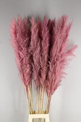<h4>Df Pampas 140cm L.pink</h4>
