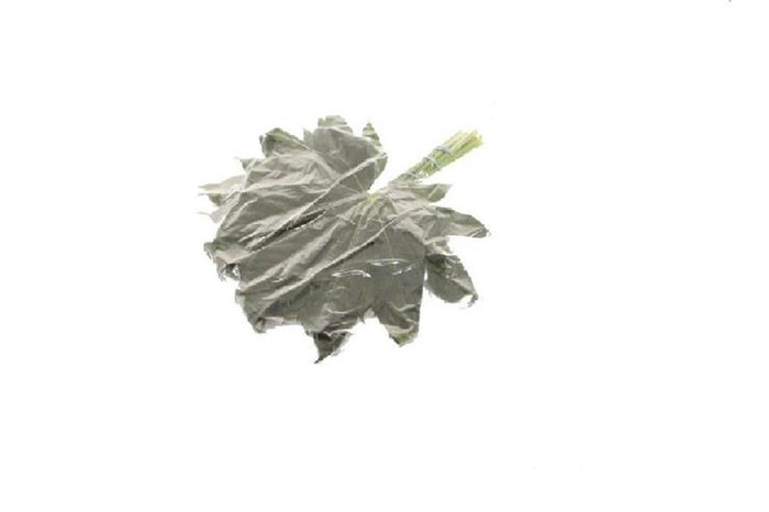 <h4>Aralia 20cm Extra X3 Vac</h4>