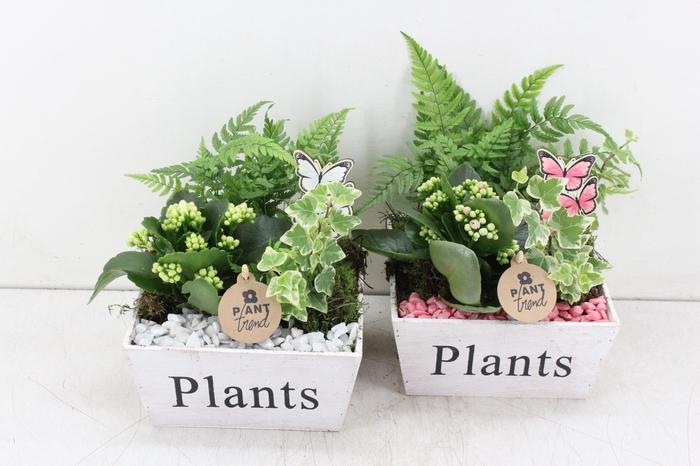 arr. PL - Hout 4kant plants - roze/wit