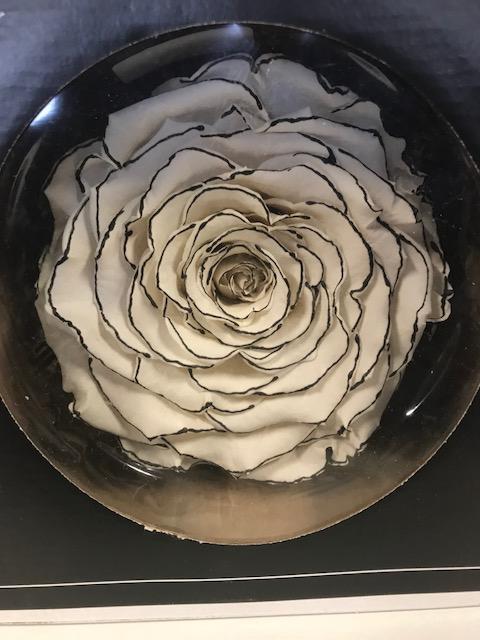Rose stab.XXL Bic-Z
