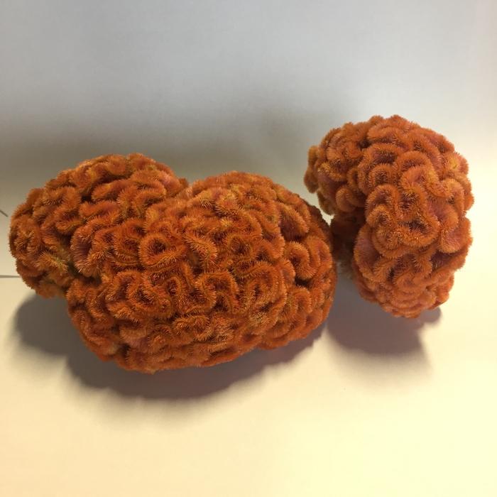 <h4>Celosia Orange</h4>