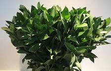 <h4>Greens - Ruscus</h4>