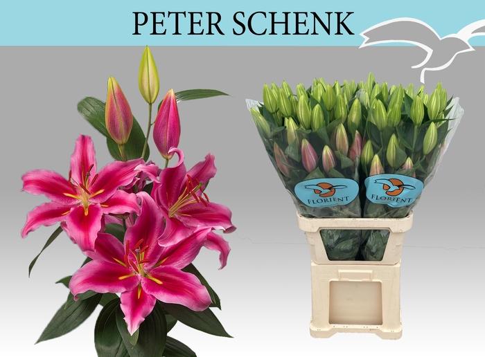 <h4>LI OR PETER SCHENK</h4>