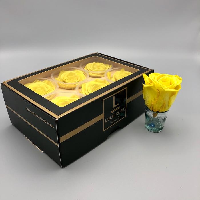 <h4>R PR Lulu (XL) Yellow</h4>