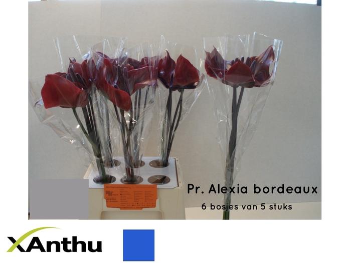 <h4>ANTH A PR AL BORDEAU</h4>