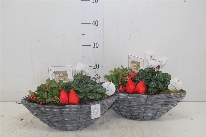<h4>Arr Tuinplanten In Bootvorm</h4>
