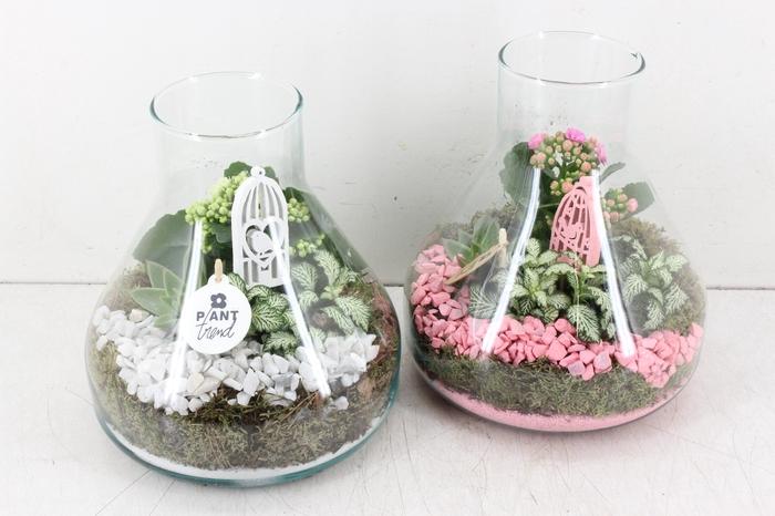 arr. PL - Glas Paris - roze/wit