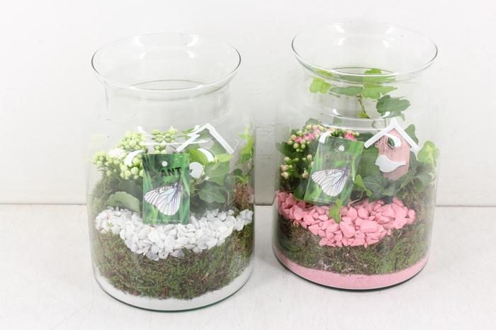 <h4>arr. PL - Glas bose vaas 2pl - roze/wit</h4>