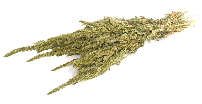 <h4>Amaranthus per bunch Green</h4>