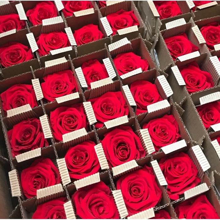 <h4>Bulk Rose stabi red</h4>