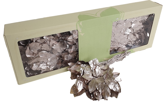 <h4>Salal tips preserved per bunch Champagne</h4>