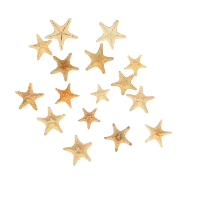 <h4>Shell Starfish d2-3cm x30</h4>