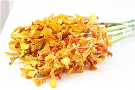 <h4>Dendrobium Mokara Pannee</h4>