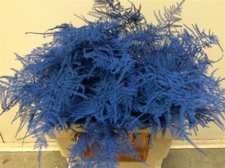 <h4>Asp. Extra Blue</h4>