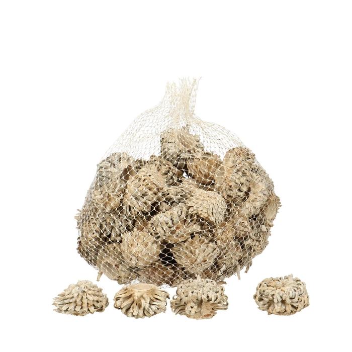 <h4>Dried articles Acorn cones 1kg</h4>