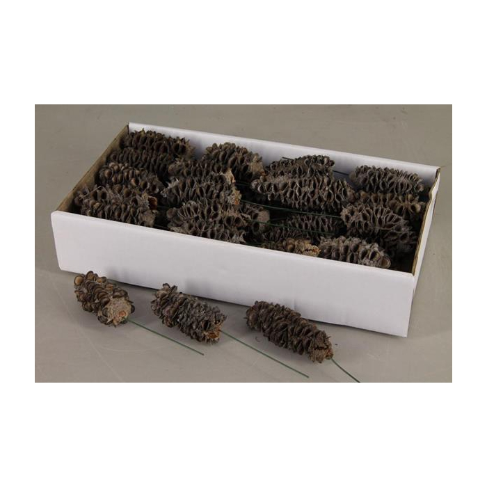 <h4>Mealy Pods10cm Wire Box (35p)</h4>